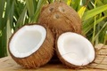 GRADE A Fresh tasty Water Coconuts for sale