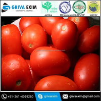 Wholesale Super Appetite Farm Fresh Tomatoes For Sale With High Quality