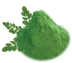 Moringa leaves Powder Wholesale