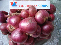 Dried RED PURPLE ONION Vietnam 2016 (Jolie whatsapp viber 84 98 358 7558)