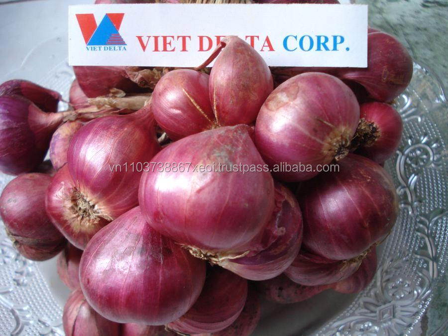 Dried RED PURPLE ONION Vietnam 2016 for sale sell supplier (Jolie whatsapp viber 84 98 358 7558)