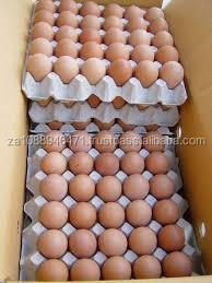 CHICKEN FRESH BROWN / WHITE TABLE EGSS FOR sale