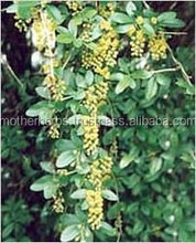 Indian herbs Barberry.
