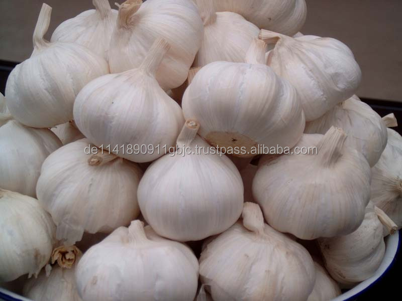 Normal White 5.5cm Natural Fresh Garlic