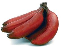 Fresh Red banana for sale