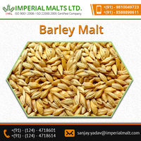High Quality Organic Barley Malt - ISO Certified Product