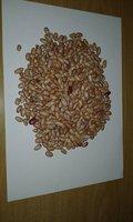 Light Speckled Kidney beans / sugar beans / pinto beans