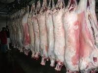HALAL MUTTON /LAMB/SHEEP BULK SUPPLIERS