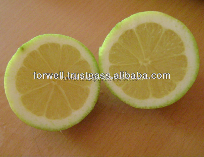 Fresh Citrus Fruits, Valencia Oranges & Lemons high quality FROM EGYPT