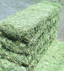 Nutritious Alfafa Hay Now in stock high quality Animal feed Cheap Price