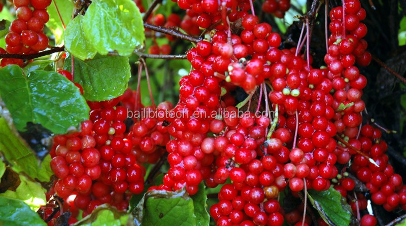 Alibaba Natural Schisandra Extract on supplier benefits