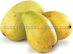 Green Mangoes , Fresh Mangoes , Bulk Mangoes , Cheap Mango Price , Pakistan Mango exporter