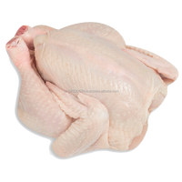BRAZIL HALAL FROZEN WHOLE CHICKEN, FROZEN CHICKEN PAWS FROZEN PROCESSED CHICKEN