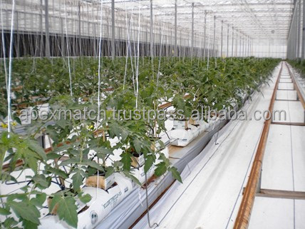 coir pith grow bags for Tomato Farming