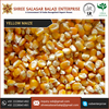 Hot Selling Yellow Maize from Biggest Suppliers at Good Price