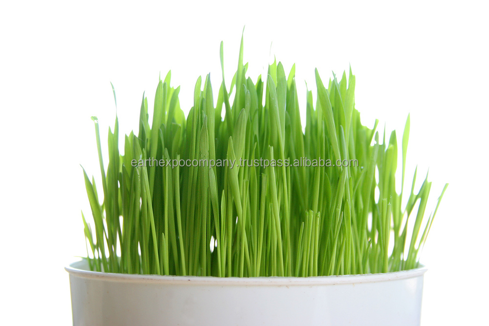 Green wheat grass juice