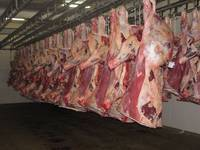 CARCASS/HALAL FRESH / FROZEN GOAT / LAMB / SHEEP MEAT