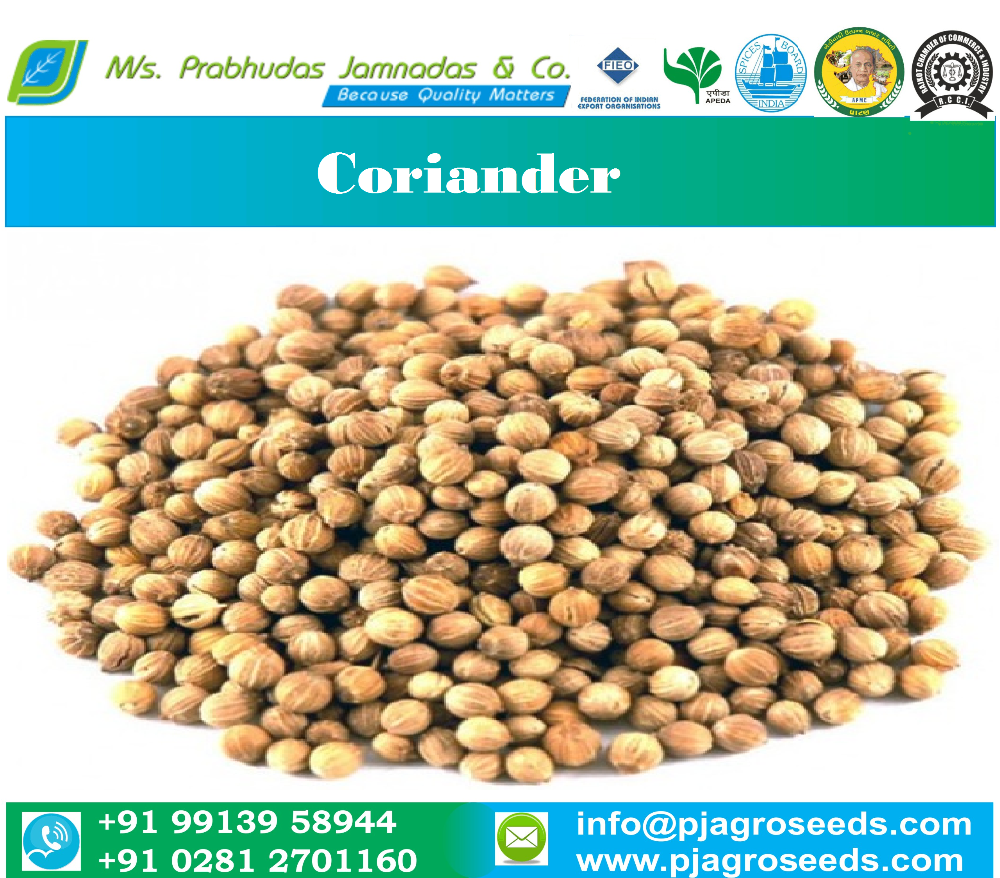 New Crop Eagle Quality Coriander Seed From India
