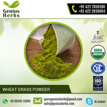 High Quality Organic Wheat Grass Powder