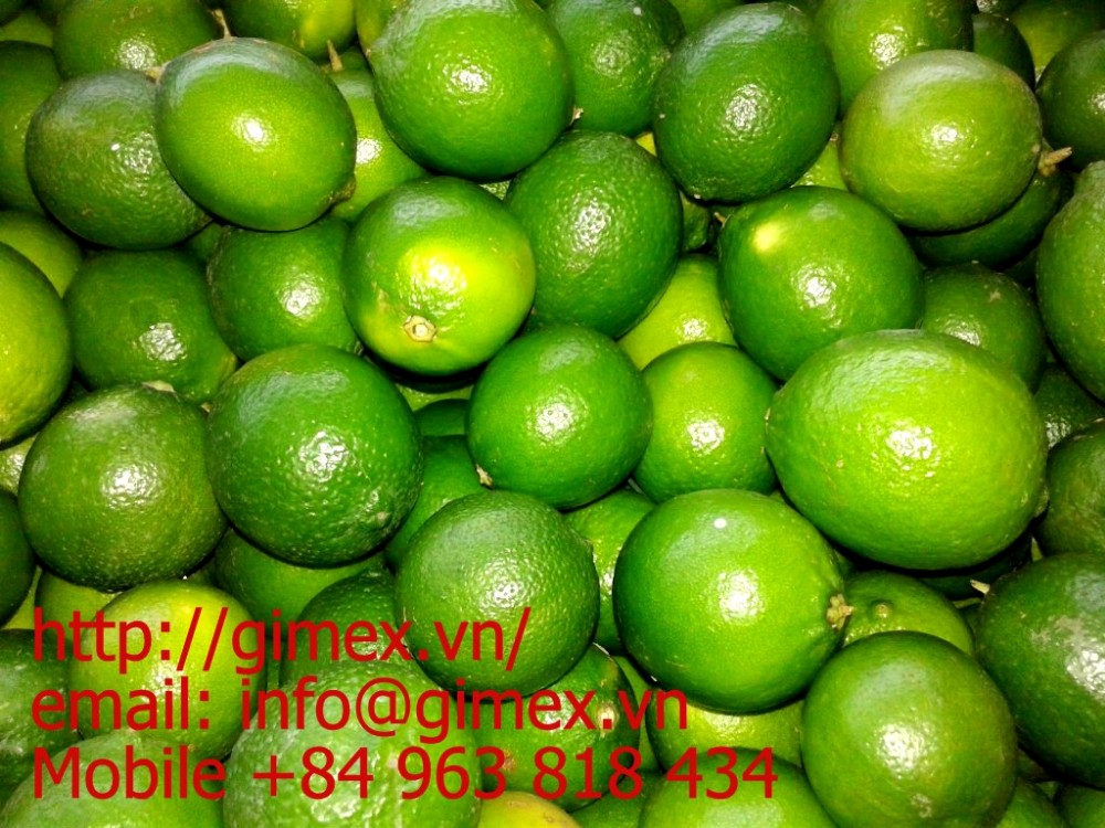 Viet nam fresh lime is cheap +84984418844 whatsapp