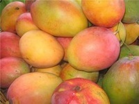 Fresh Mangos /Fresh Whole Peruvian Kent Mango