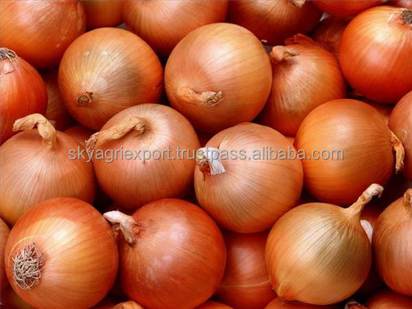 Premium Grade Yellow Onion Market Price for Export