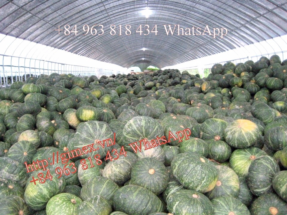 FRESH PUMPKIN +84963818434 whatsapp