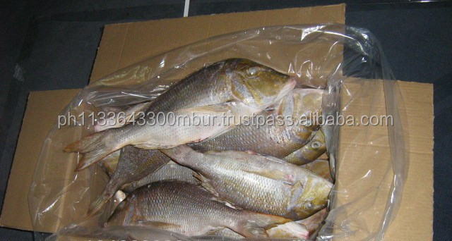 Best Quality Frozen Emperor Fish