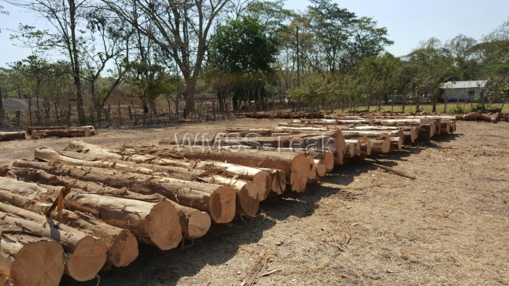 Cypress wood round logs