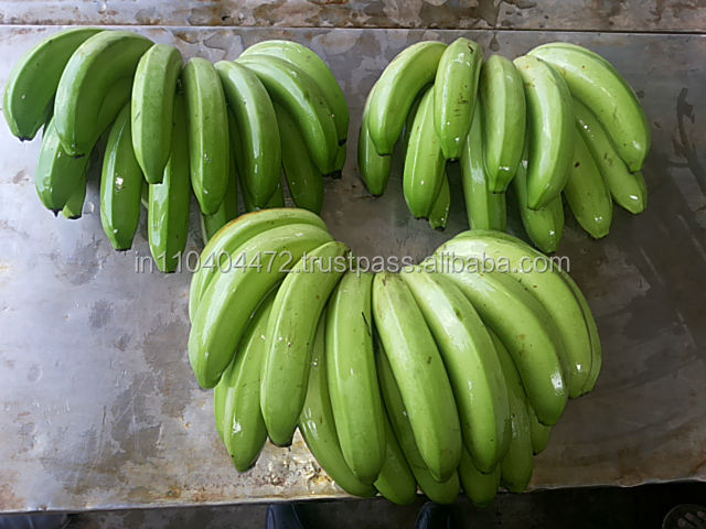 Common Cultivation Type fresh green cavendish bananas