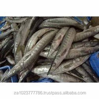 Snoek (Barracouta) Snoek Seafrozen H&G&T Frozen Fish, Salted Fish Snoek Fish Snake Fish FOR SALE