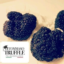 Fresh Black Summer Truffle 1rst Class Selected - Di Tommaso Truffle