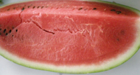 Watermelons from Tunisia