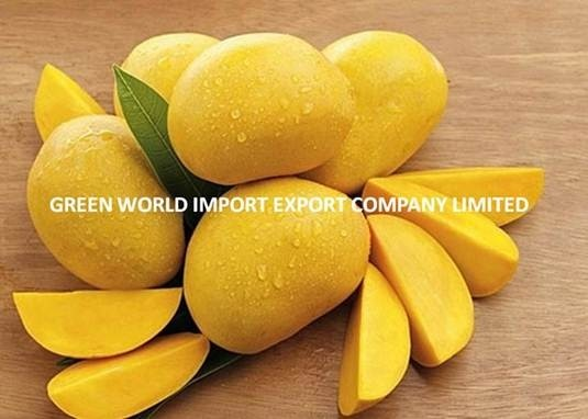 HIGH QUALITY FRESH AND FROZEN VIETNAMESE MANGO