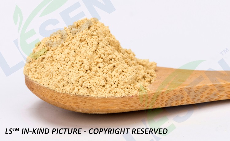 High Quality 100% Natural Panax Ginseng Root Extract Powder Ginsenoside Extract