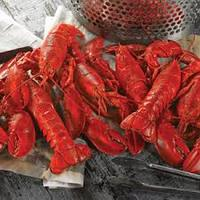 Live American lobster For sale
