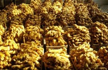 Bulk Fresh Ginger /Dried organic ginger Best Prices