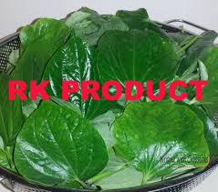Natural & Pure Betel Leaf Essential Oil