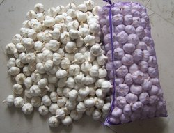 High Quality Fresh Garlic for sale