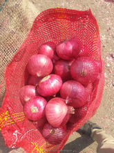 fresh red nashik onion exporter from india