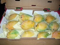 best price for fresh organic mango