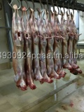 HALAL CHILLED FRESH GOAT CARCASS
