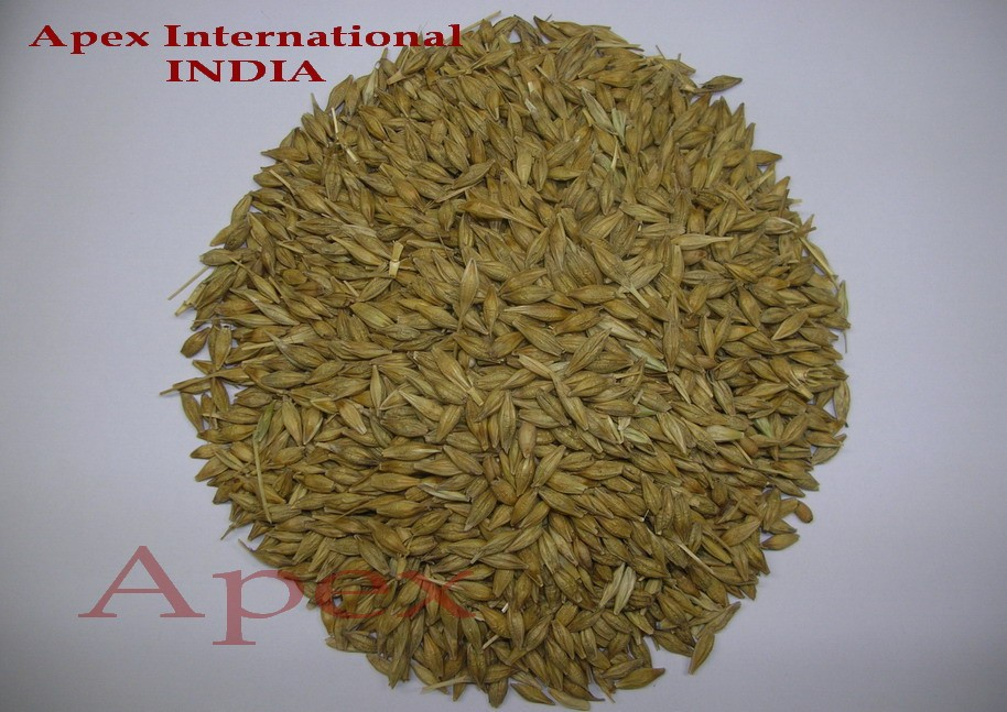 Quality Barley Grain