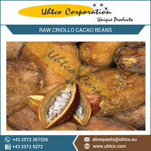Raw Criollo Cacao Beans with Best Nutrient Rich and Organic Certified