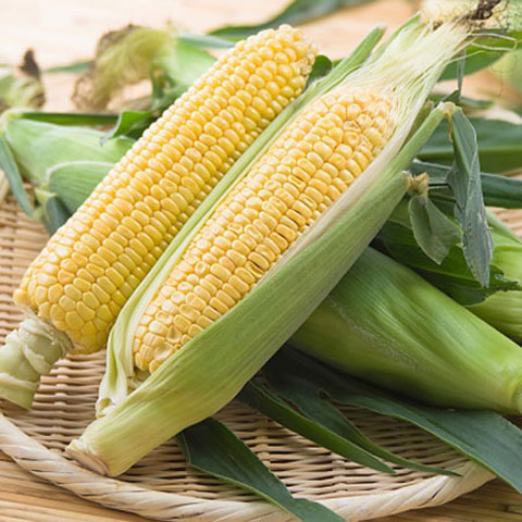 GRADE 2 YELLOW CORN