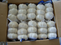 Thai new fresh white garlic of 8kg/10kg/20kg mesh bag
