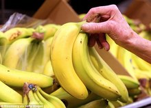Farm fresh Cavendish banana for sale