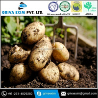 High Quality Fresh Potato Price Per Ton from India