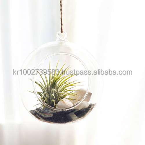 "Tillandsia Hanging Glass Gift Set."" Black Sea "" by Joinflower Joinfolia"