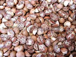 Betel Nuts From Thailand, Dried